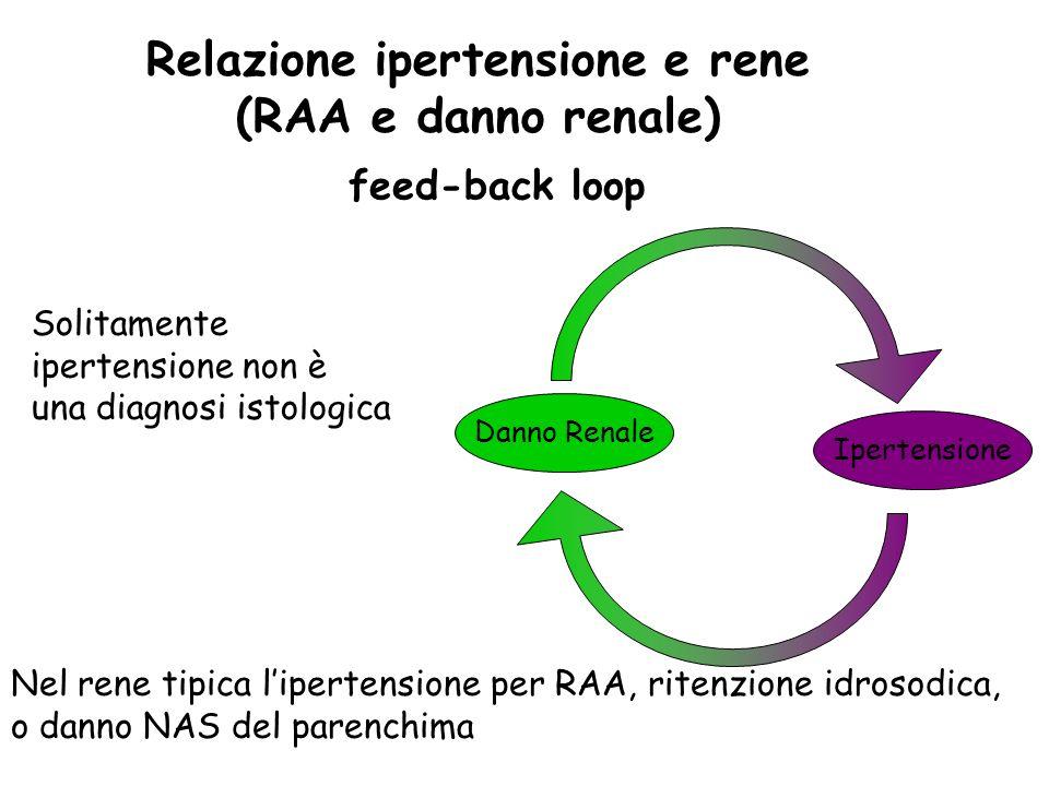 Relazione ipertensione e rene (RAA e danno renale) Danno Renale Ipertensione feed-back loop Solitamente ipertensione non è una diagnosi istologica Nel rene tipica lipertensione per RAA, ritenzione idrosodica, o danno NAS del parenchima