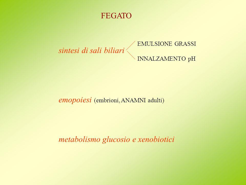 FEGATO sintesi di sali biliari emopoiesi (embrioni, ANAMNI adulti) metabolismo glucosio e xenobiotici EMULSIONE GRASSI INNALZAMENTO pH