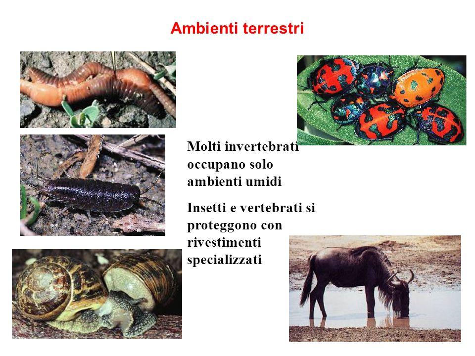 Ambienti terrestri Molti invertebrati occupano solo ambienti umidi Insetti e vertebrati si proteggono con rivestimenti specializzati