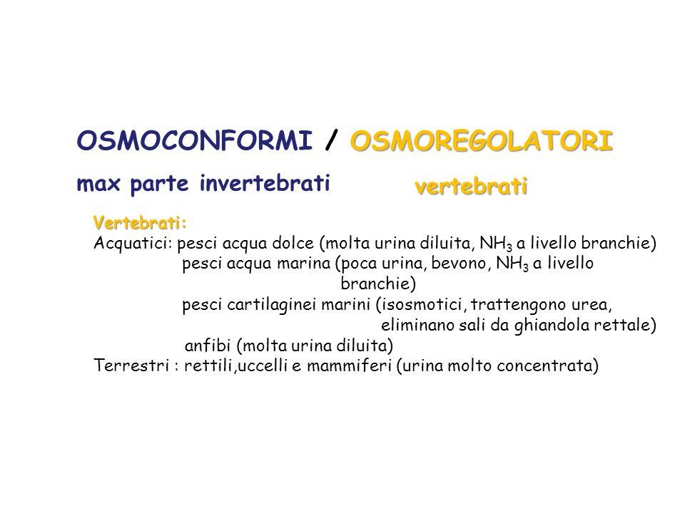 OSMOREGOLATORI OSMOCONFORMI / OSMOREGOLATORI max parte invertebrati vertebrati Vertebrati: Acquatici: pesci acqua dolce (molta urina diluita, NH 3 a l