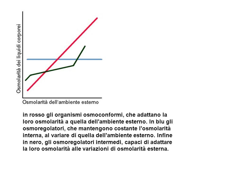 in rosso gli organismi osmoconformi, che adattano la loro osmolarità a quella dell'ambiente esterno. In blu gli osmoregolatori, che mantengono costant