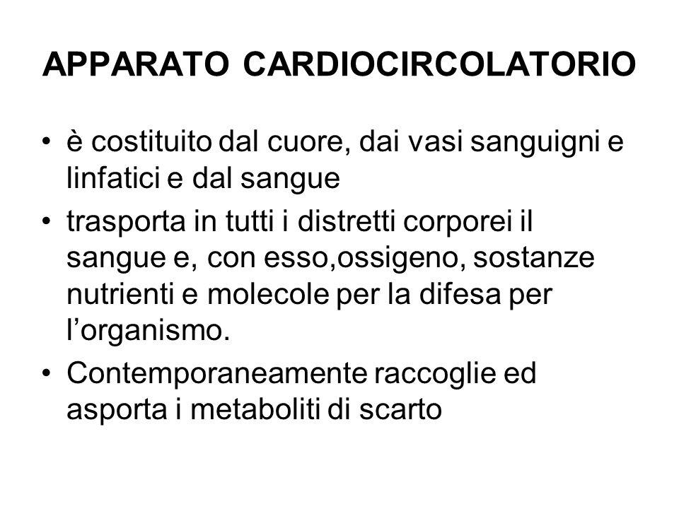 APPARATO CARDIOCIRCOLATORIO è costituito dal cuore, dai vasi sanguigni e linfatici e dal sangue trasporta in tutti i distretti corporei il sangue e, c