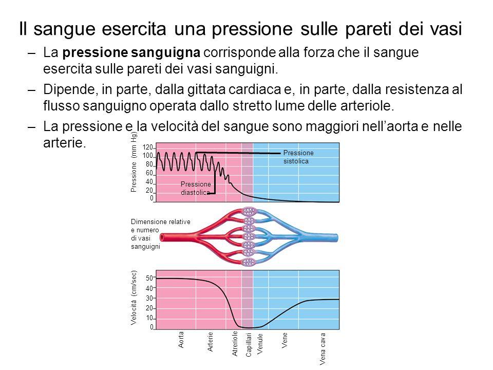 Il sangue esercita una pressione sulle pareti dei vasi –La pressione sanguigna corrisponde alla forza che il sangue esercita sulle pareti dei vasi san