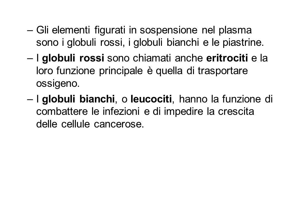 –Gli elementi figurati in sospensione nel plasma sono i globuli rossi, i globuli bianchi e le piastrine. –I globuli rossi sono chiamati anche eritroci