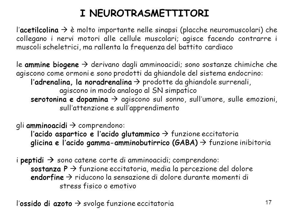 17 I NEUROTRASMETTITORI lacetilcolina è molto importante nelle sinapsi (placche neuromuscolari) che collegano i nervi motori alle cellule muscolari; a