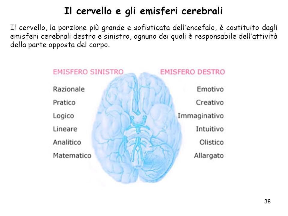 38 Il cervello e gli emisferi cerebrali Il cervello, la porzione più grande e sofisticata dellencefalo, è costituito dagli emisferi cerebrali destro e