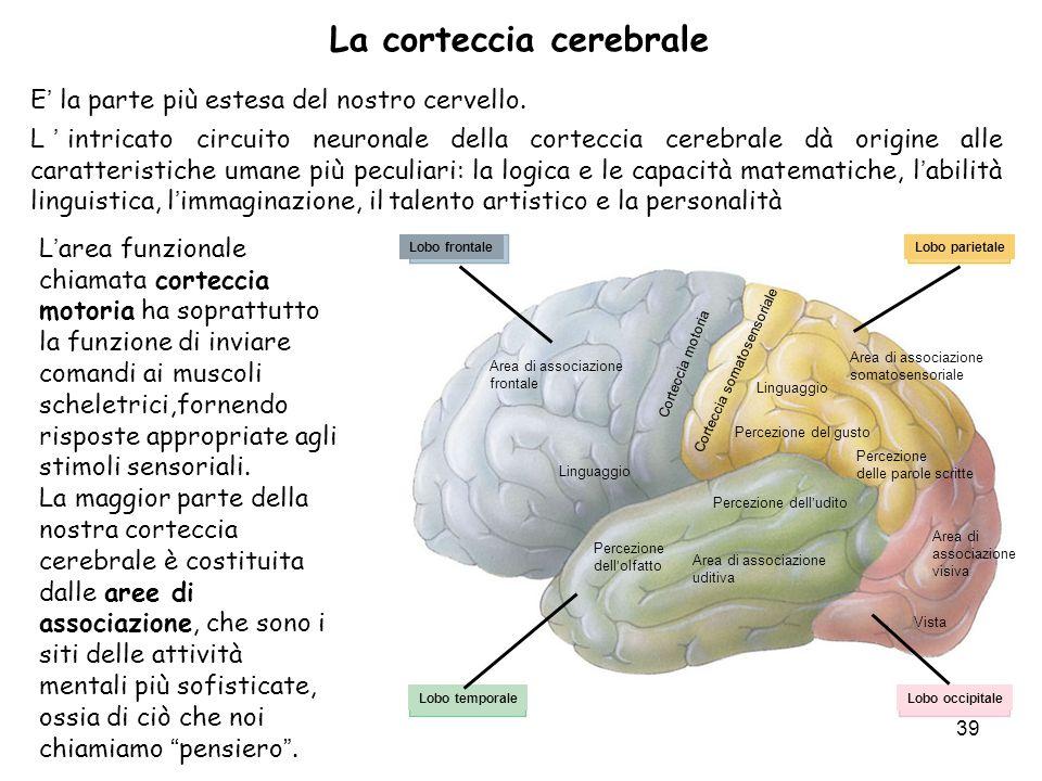 39 E la parte più estesa del nostro cervello. Lintricato circuito neuronale della corteccia cerebrale dà origine alle caratteristiche umane più peculi