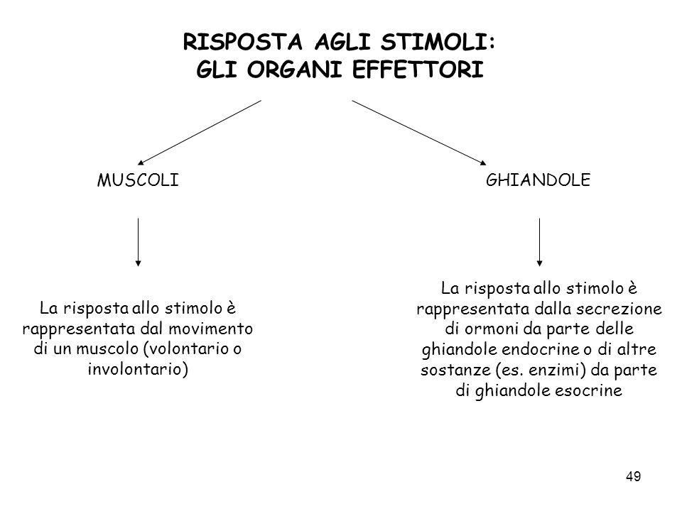 49 RISPOSTA AGLI STIMOLI: GLI ORGANI EFFETTORI MUSCOLIGHIANDOLE La risposta allo stimolo è rappresentata dal movimento di un muscolo (volontario o inv