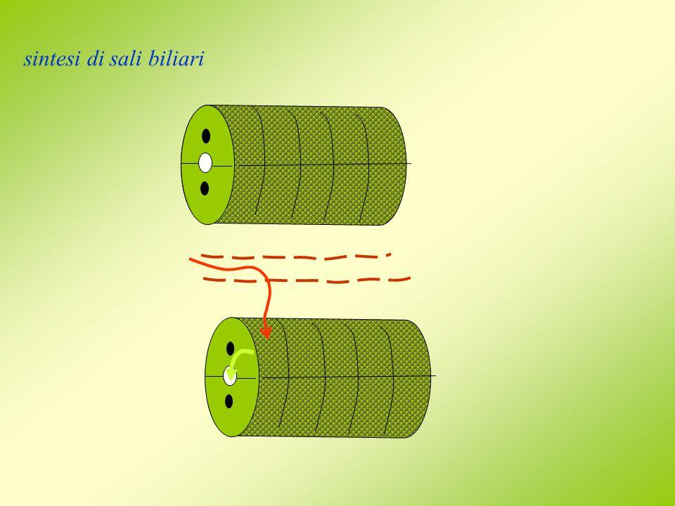 sintesi di sali biliari