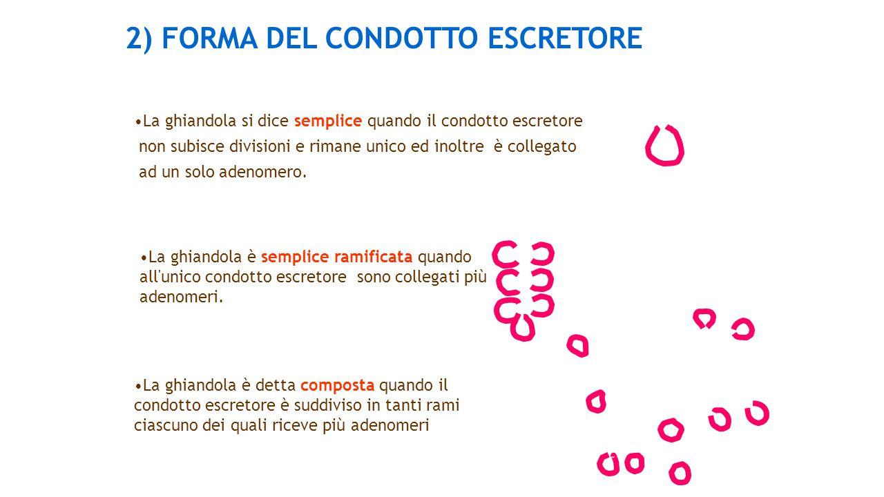 2) FORMA DEL CONDOTTO ESCRETORE La ghiandola si dice semplice quando il condotto escretore non subisce divisioni e rimane unico ed inoltre è collegato