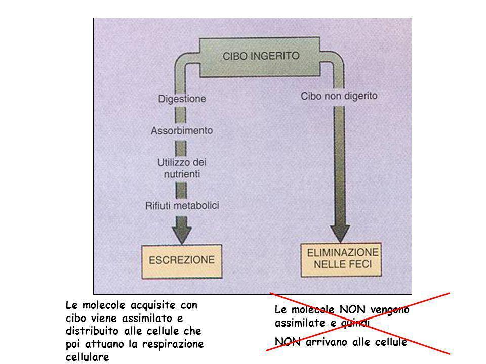 Le molecole acquisite con cibo viene assimilato e distribuito alle cellule che poi attuano la respirazione cellulare Le molecole NON vengono assimilat