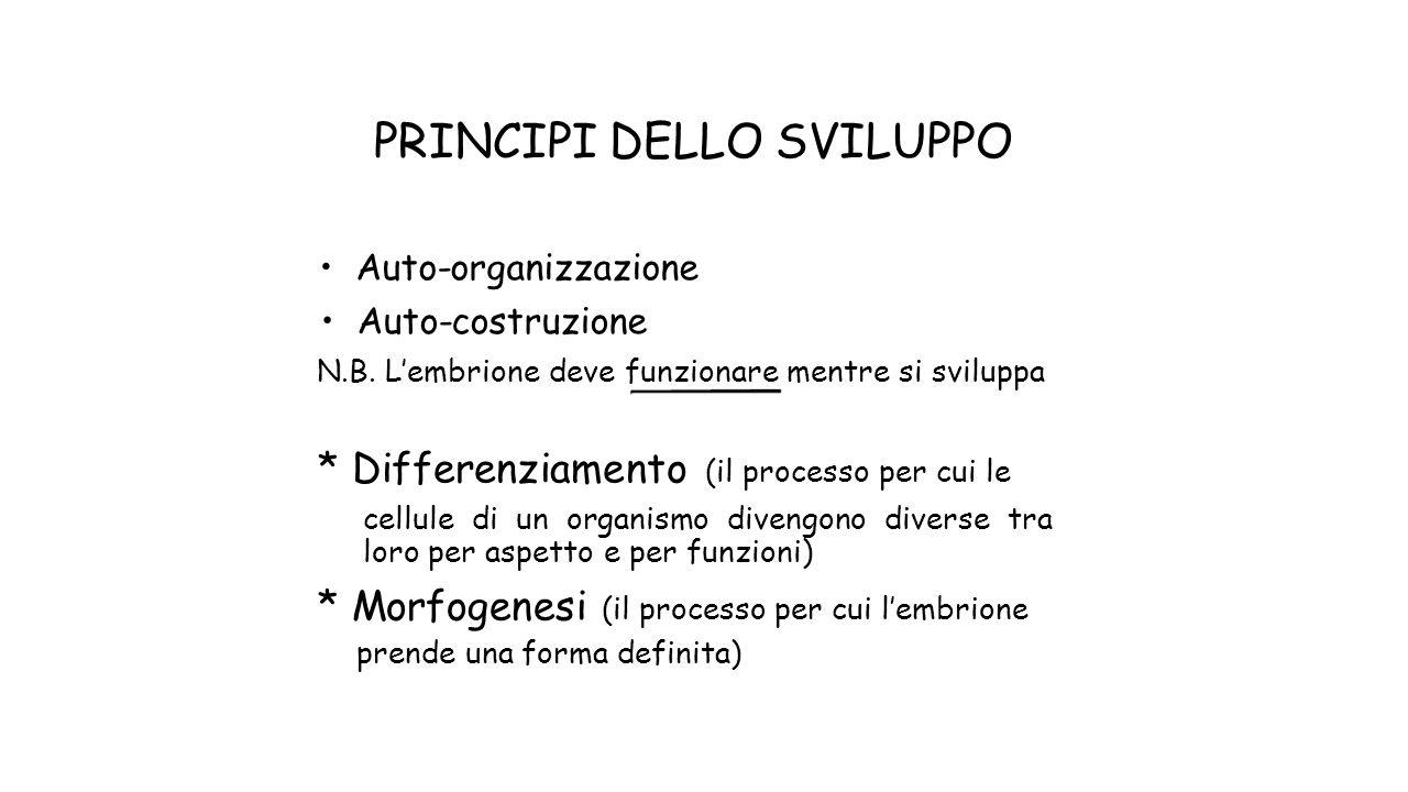 PRINCIPI DELLO SVILUPPO Auto-organizzazione Auto-costruzione N.B. Lembrione deve funzionare mentre si sviluppa * Differenziamento (il processo per cui