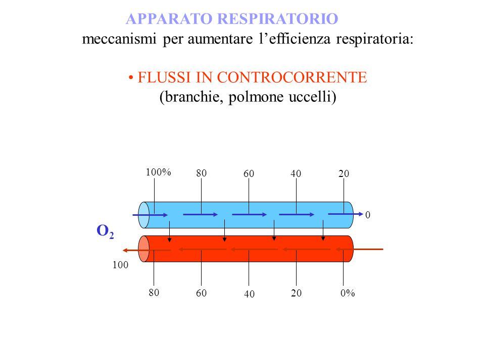 APPARATO RESPIRATORIO meccanismi per aumentare lefficienza respiratoria: FLUSSI IN CONTROCORRENTE (branchie, polmone uccelli) O2O2 80 100 100% 20 4060