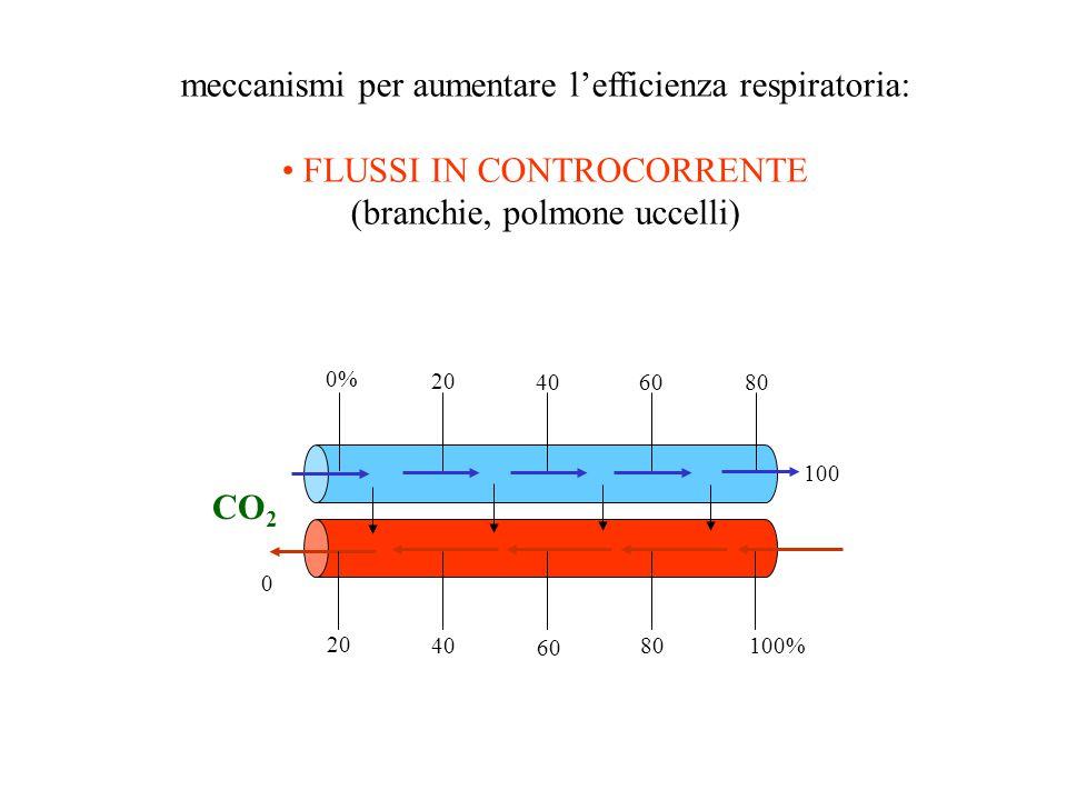 meccanismi per aumentare lefficienza respiratoria: FLUSSI IN CONTROCORRENTE (branchie, polmone uccelli) CO 2 20 0 0% 80 6040 20 100 40 60 80 100%