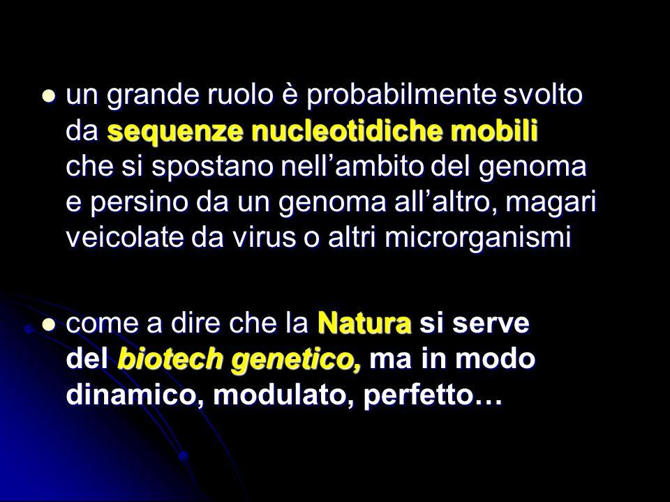 un grande ruolo è probabilmente svolto da sequenze nucleotidiche mobili che si spostano nellambito del genoma e persino da un genoma allaltro, magari