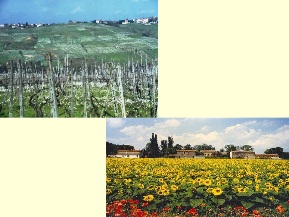 È dunque questo concetto che noi adottiamo soprattutto alla luce della CEP, convezione europea del paesaggio, bisogna percepire che si può gestire il territorio nellidentità del paesaggio, vale a dire allinterno del frutto del lavoro di generazioni di agricoltori, legati a motivazioni di sviluppo e scelte di utilizzo del territorio.