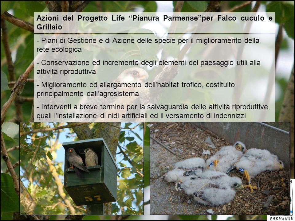 Azioni del Progetto Life Pianura Parmenseper Falco cuculo e Grillaio - Piani di Gestione e di Azione delle specie per il miglioramento della rete ecol