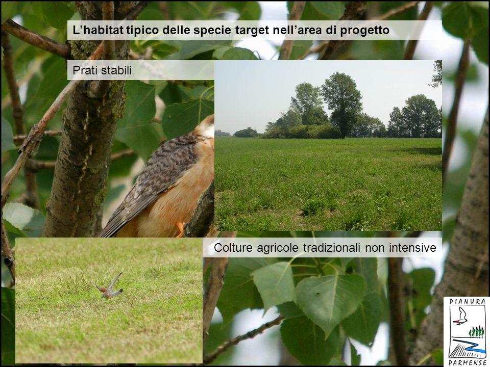 Lhabitat tipico delle specie target nellarea di progetto Prati stabili Colture agricole tradizionali non intensive