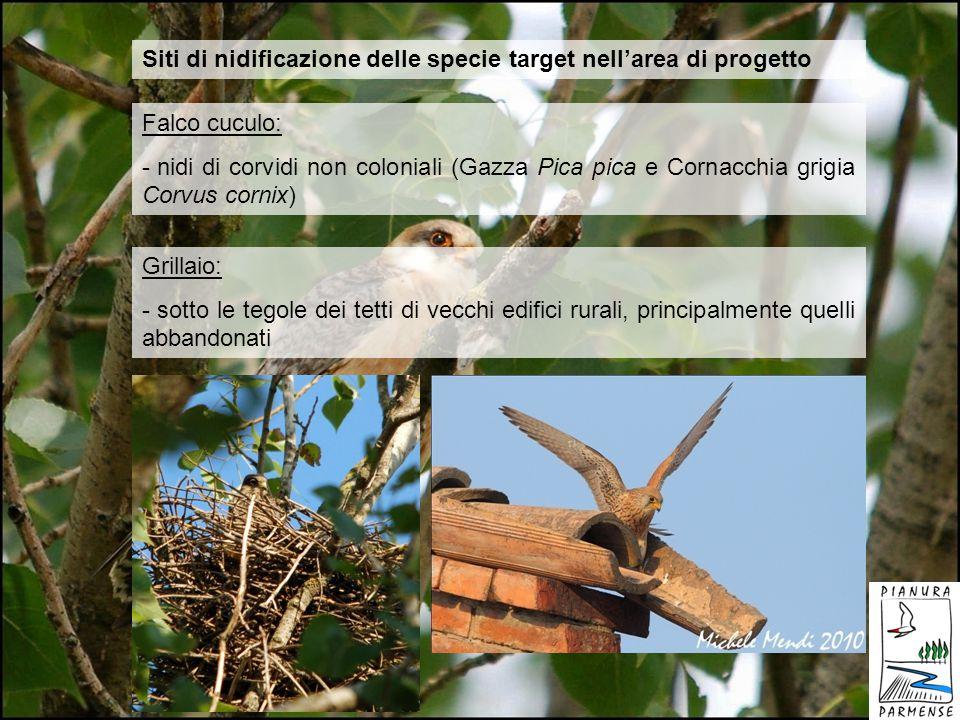 Siti di nidificazione delle specie target nellarea di progetto Falco cuculo: - nidi di corvidi non coloniali (Gazza Pica pica e Cornacchia grigia Corv