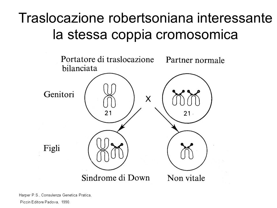 Traslocazione robertsoniana interessante la stessa coppia cromosomica Harper P.S., Consulenza Genetica Pratica, Piccin Editore Padova, 1990.