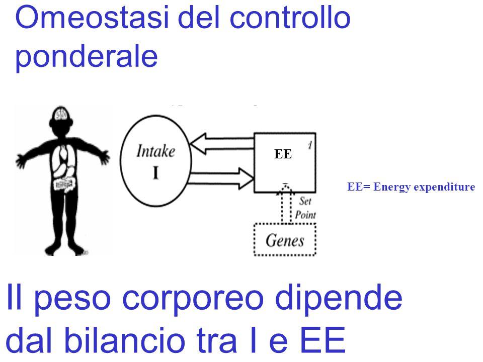 Omeostasi del controllo ponderale EE EE= Energy expenditure Il peso corporeo dipende dal bilancio tra I e EE