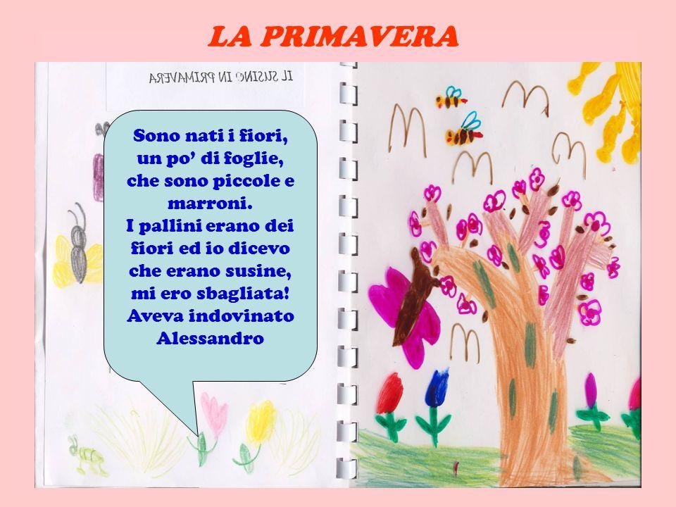 Sono nati i fiori, un po di foglie, che sono piccole e marroni.
