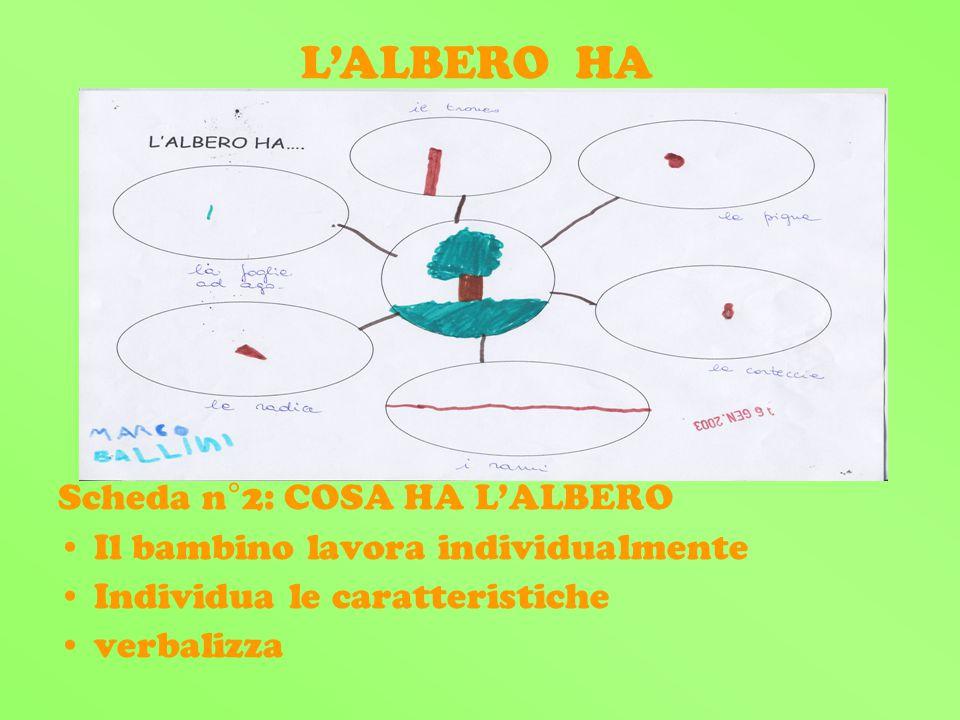 Scheda n°2: COSA HA LALBERO Il bambino lavora individualmente Individua le caratteristiche verbalizza LALBERO HA