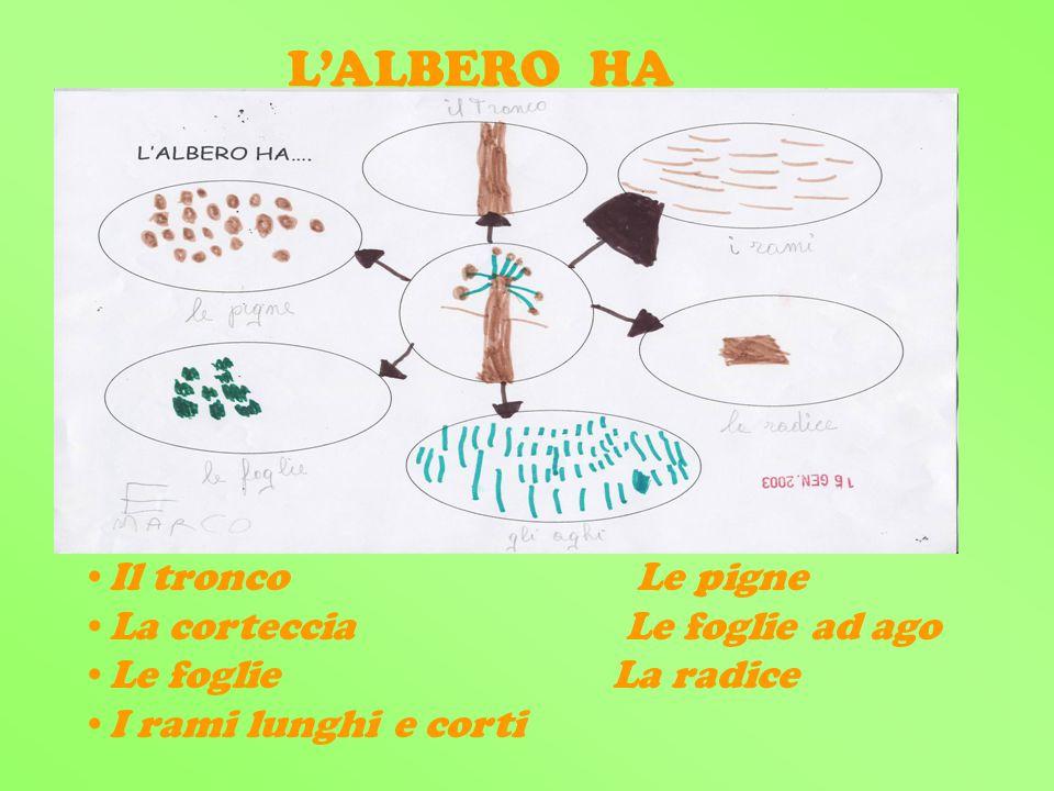 Il tronco Le pigne La corteccia Le foglie ad ago Le foglie La radice I rami lunghi e corti LALBERO HA