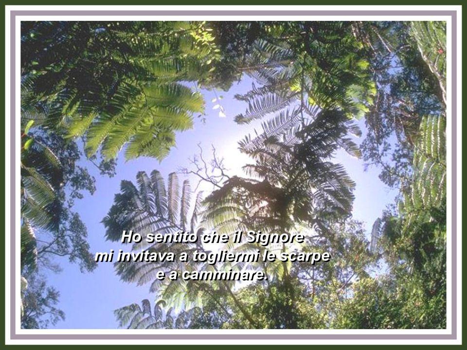Per questo ho sentito un forte bisogno di chiedere perdono al Signore e ai miei fratelli.