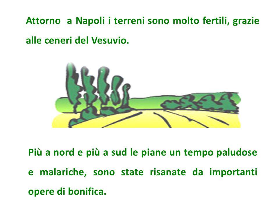 Attorno a Napoli i terreni sono molto fertili, grazie alle ceneri del Vesuvio.