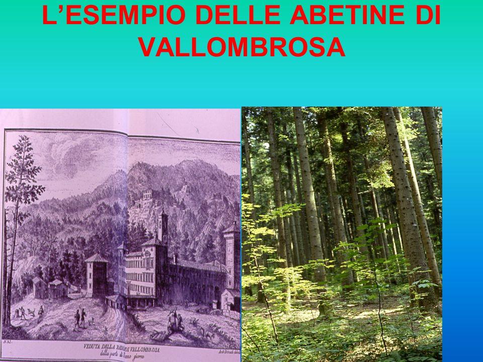 LESEMPIO DELLE ABETINE DI VALLOMBROSA