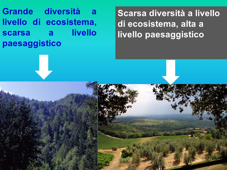 Grande diversità a livello di ecosistema, scarsa a livello paesaggistico Scarsa diversità a livello di ecosistema, alta a livello paesaggistico