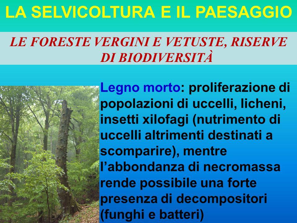 LA SELVICOLTURA E IL PAESAGGIO Legno morto: proliferazione di popolazioni di uccelli, licheni, insetti xilofagi (nutrimento di uccelli altrimenti dest