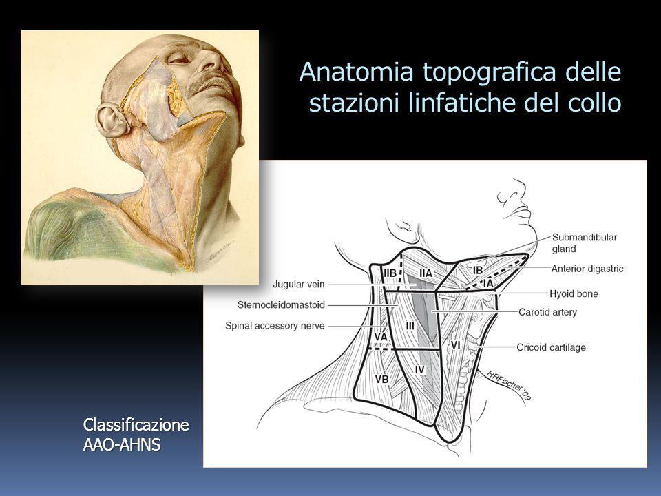 Anatomia topografica delle stazioni linfatiche del collo Classificazione AAO-AHNS