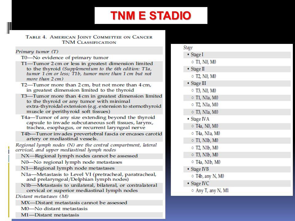 TNME STADIO TNM E STADIO