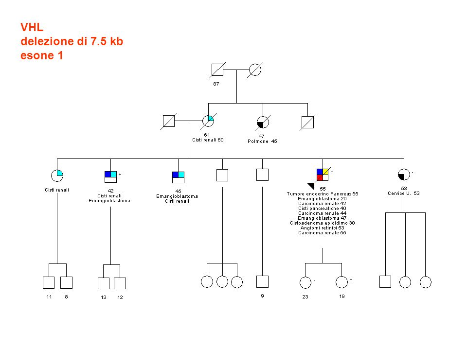 VHL delezione di 7.5 kb esone 1