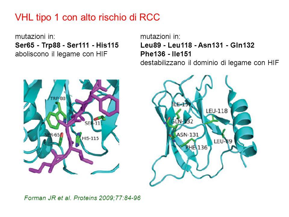 Forman JR et al. Proteins 2009;77:84-96 mutazioni in: Ser65 - Trp88 - Ser111 - His115 aboliscono il legame con HIF mutazioni in: Leu89 - Leu118 - Asn1