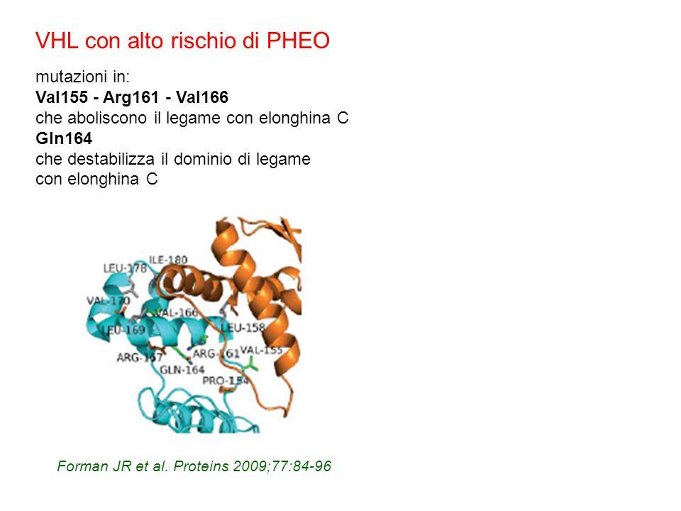 Forman JR et al. Proteins 2009;77:84-96 VHL con alto rischio di PHEO mutazioni in: Val155 - Arg161 - Val166 che aboliscono il legame con elonghina C G