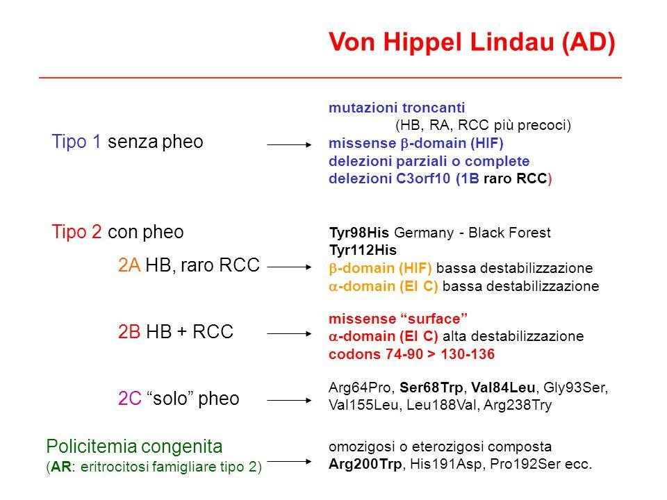 Von Hippel Lindau (AD) Tipo 2 con pheo 2A HB, raro RCC 2B HB + RCC 2C solo pheo Tyr98His Germany - Black Forest Tyr112His -domain (HIF) bassa destabil
