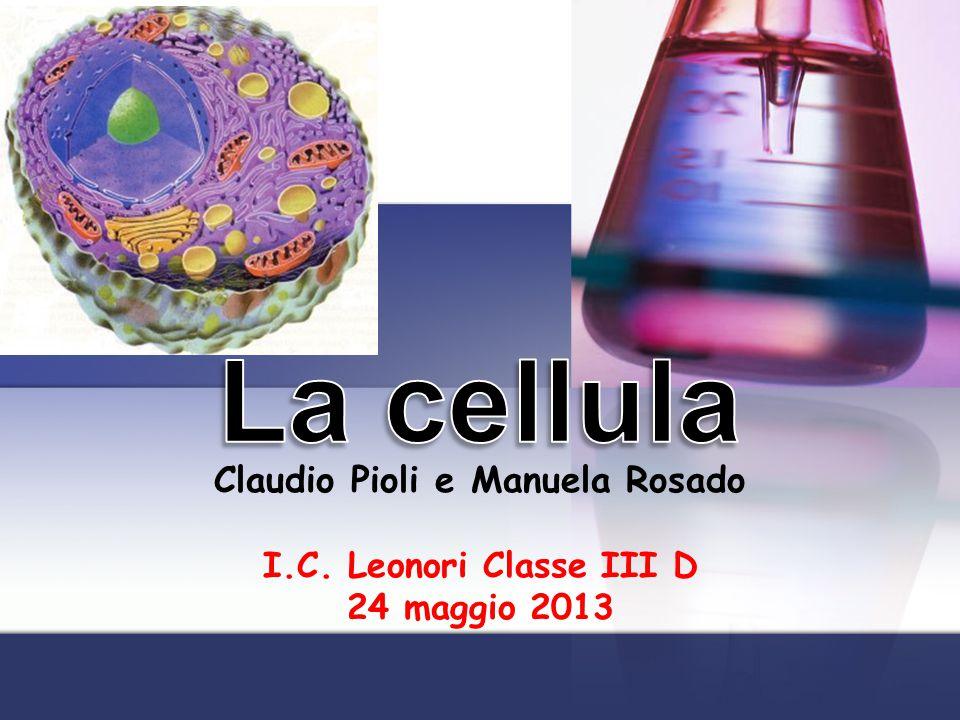 La classe III D primaria dellI.C.A.