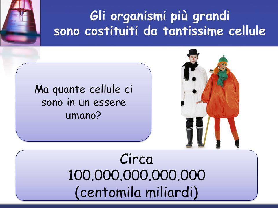 Gli organismi più grandi sono costituiti da tantissime cellule Ma quante cellule ci sono in un essere umano? Circa 100.000.000.000.000 (centomila mili