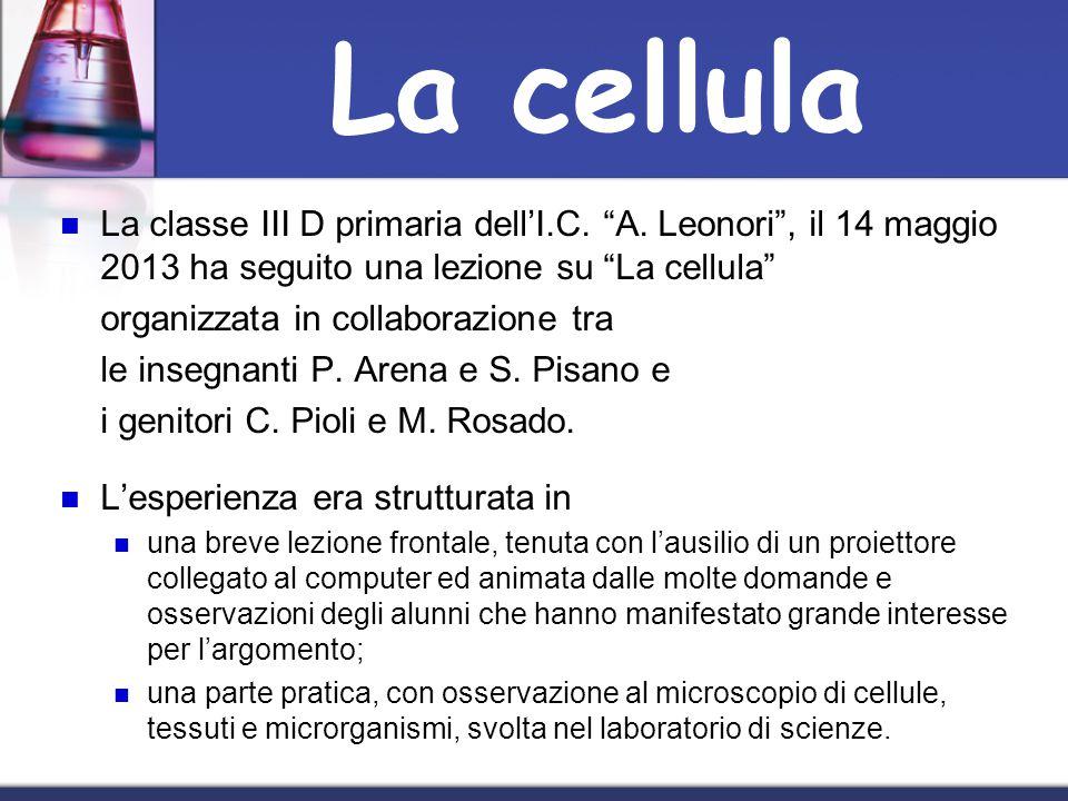 La classe III D primaria dellI.C. A. Leonori, il 14 maggio 2013 ha seguito una lezione su La cellula organizzata in collaborazione tra le insegnanti P