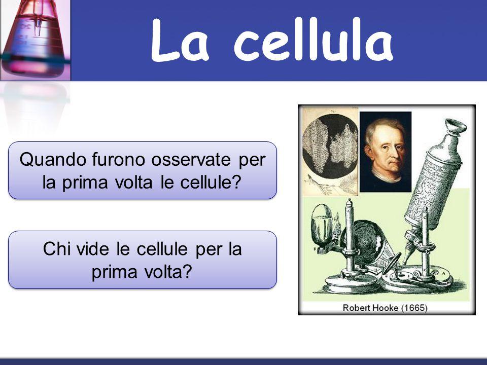 Robert Hooke, nel 1665, osservò un pezzetto di sughero e notò che era fatto da piccole cellette simili a quelle di un alveare e così le chiamò cellule Robert Hooke, nel 1665, osservò un pezzetto di sughero e notò che era fatto da piccole cellette simili a quelle di un alveare e così le chiamò cellule La cellula