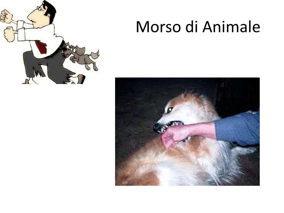 Morso di Animale