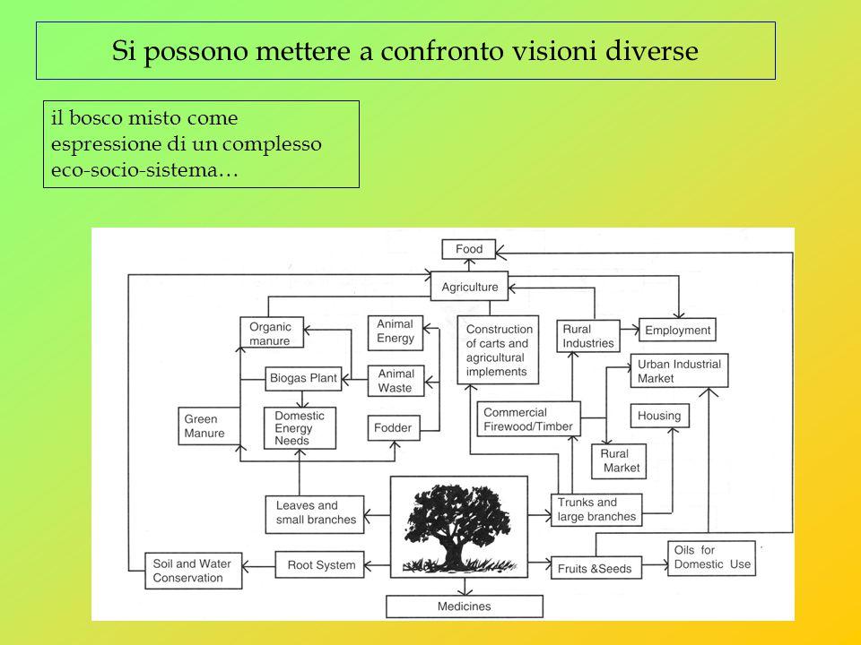 Si possono mettere a confronto visioni diverse il bosco misto come espressione di un complesso eco-socio-sistema…