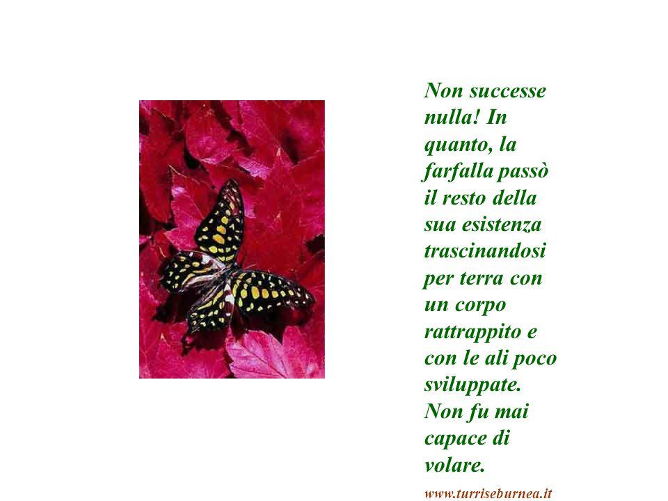 Non successe nulla! In quanto, la farfalla passò il resto della sua esistenza trascinandosi per terra con un corpo rattrappito e con le ali poco svilu