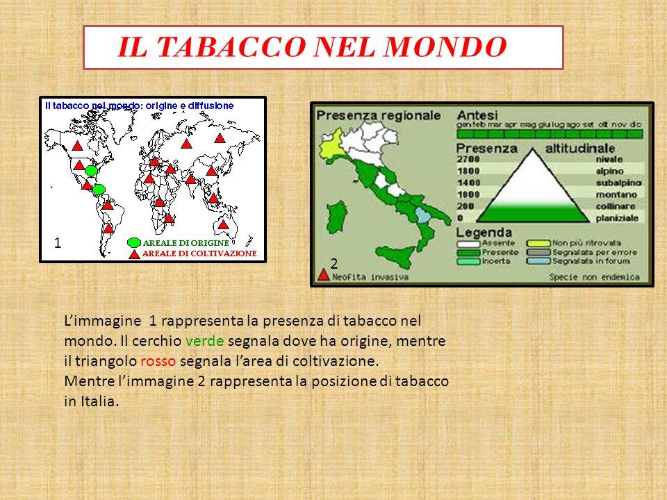 IL TABACCO NEL MONDO 1 2 Limmagine 1 rappresenta la presenza di tabacco nel mondo. Il cerchio verde segnala dove ha origine, mentre il triangolo rosso