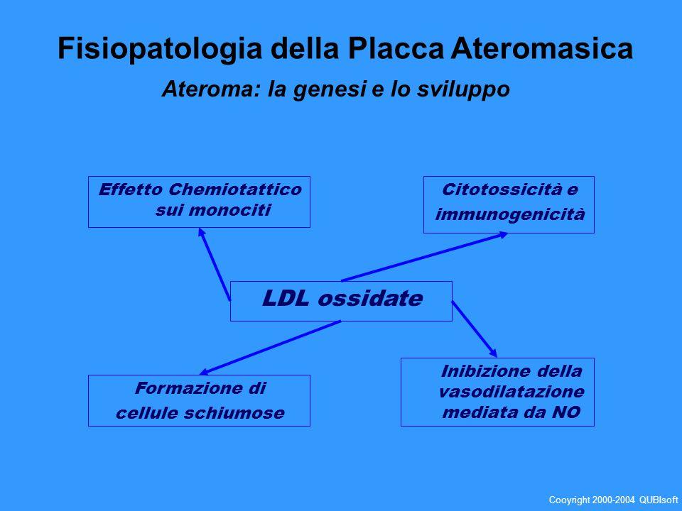 Effetto Chemiotattico sui monociti Formazione di cellule schiumose Citotossicità e immunogenicità Inibizione della vasodilatazione mediata da NO LDL o