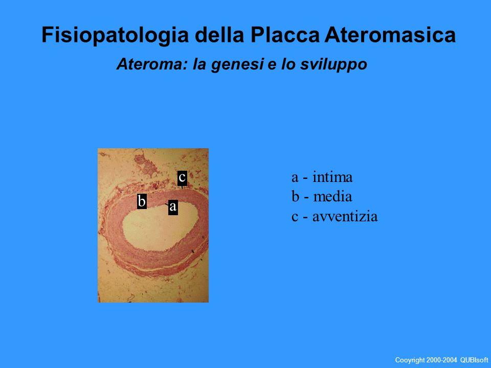 a b c a - intima b - media c - avventizia Fisiopatologia della Placca Ateromasica Ateroma: la genesi e lo sviluppo Cooyright 2000-2004 QUBIsoft
