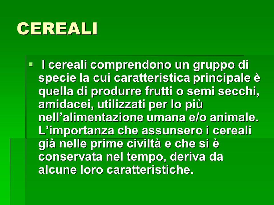 CEREALI I cereali comprendono un gruppo di specie la cui caratteristica principale è quella di produrre frutti o semi secchi, amidacei, utilizzati per lo più nellalimentazione umana e/o animale.